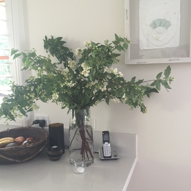 june mock orange kitchen