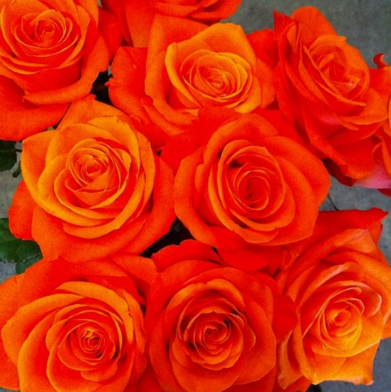 Coloured Roses – bright