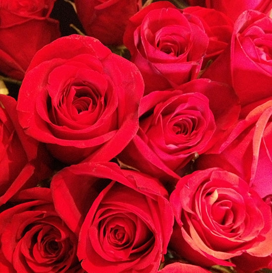 Red <br> Roses